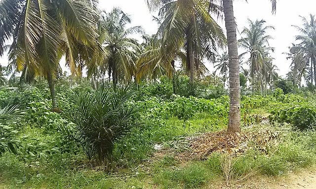 A vendre: Terrain de 1/2lot nu à Togokome, Lomé-Aného.
