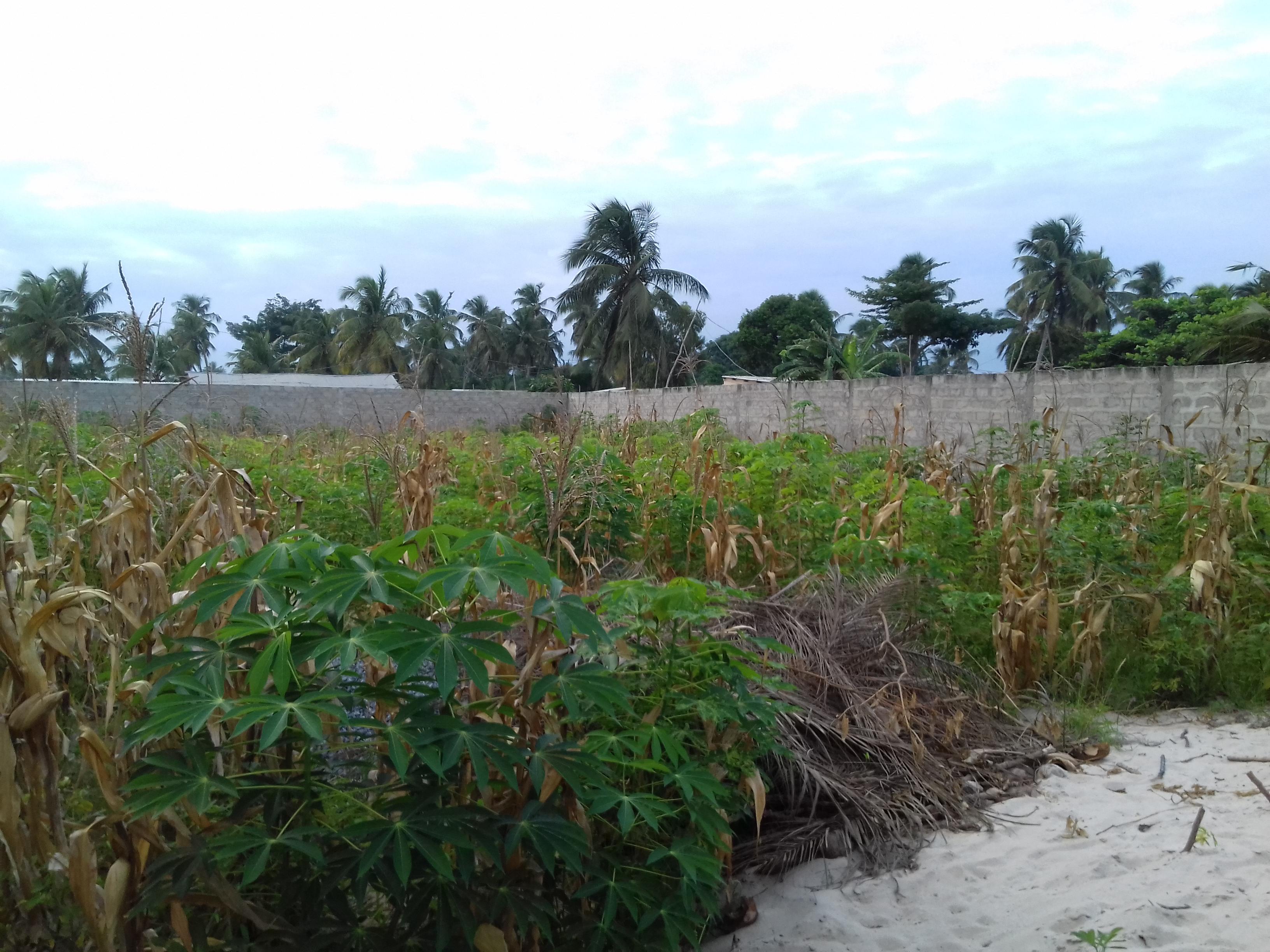 A vendre: Terrain nu clôturé, Amadahome-Adidogome